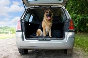 Anschnallpflicht für Tiere? Auch Hunde und Co. müssen gesichert werden.